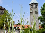 Turfgrass: Mount Royal Station Clocktower